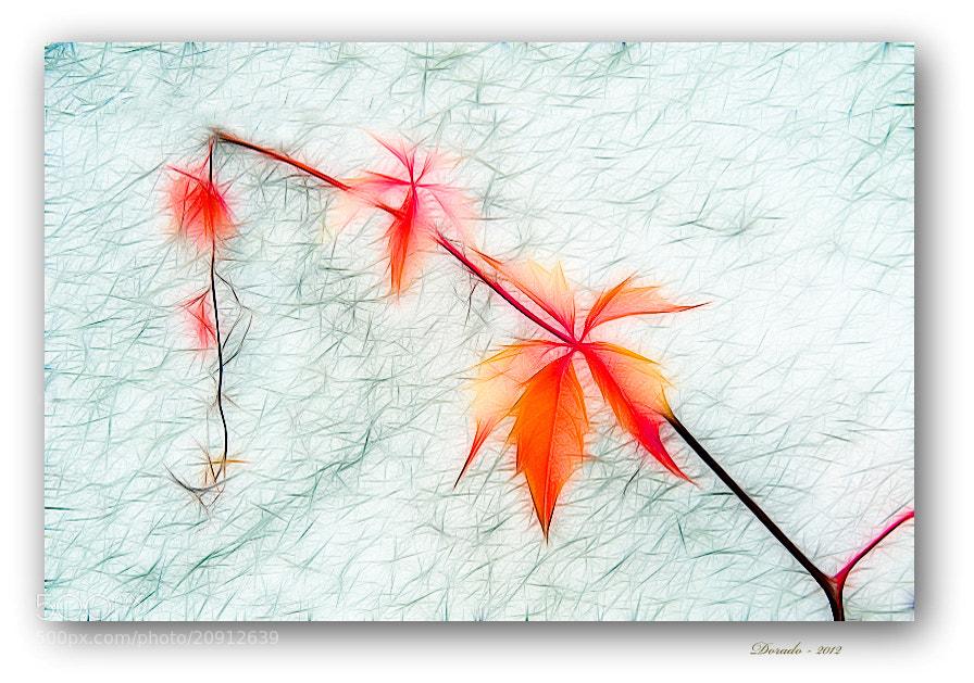 Photograph Autumn magic LXXVIII by Juan Dorado on 500px