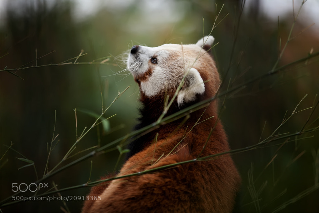 Photograph Bamboo tune by Cath Schneider on 500px