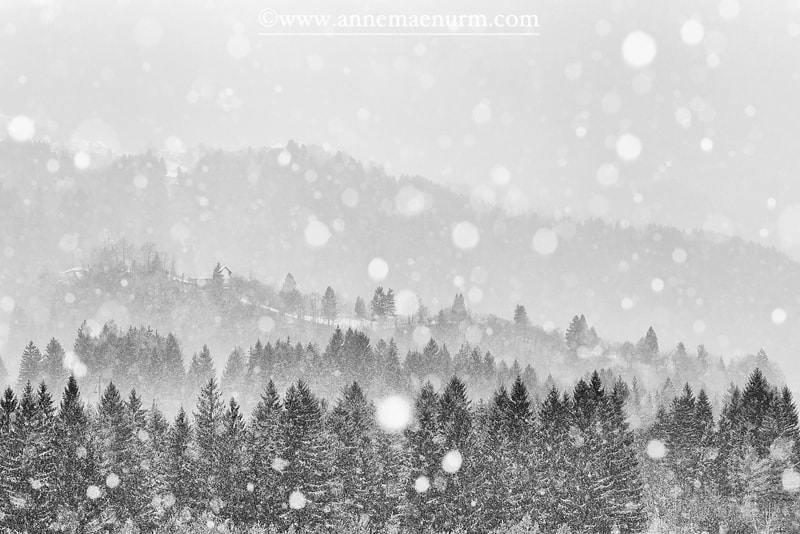 Photograph Let it Snow by Anne Mäenurm on 500px