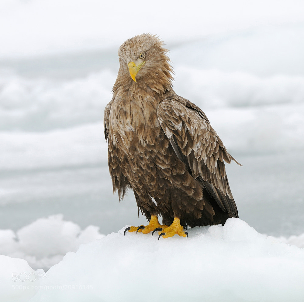 Photograph What Happened Down There by Harry  Eggens on 500px