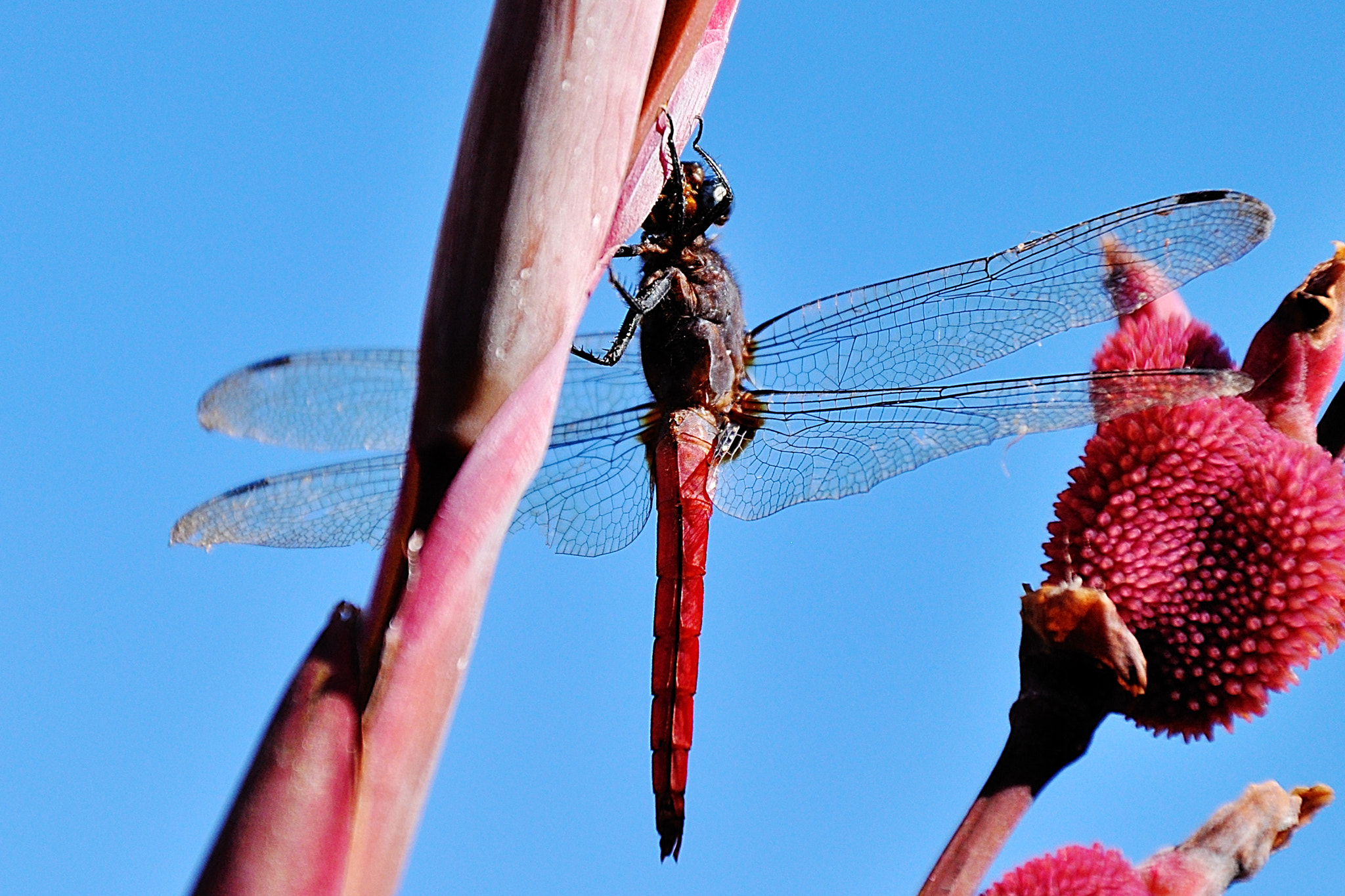 Photograph Insect against Sky by Ritesh Arora on 500px