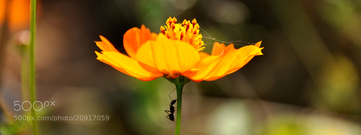Photograph Flower, webs and an ant by Ritesh Arora on 500px