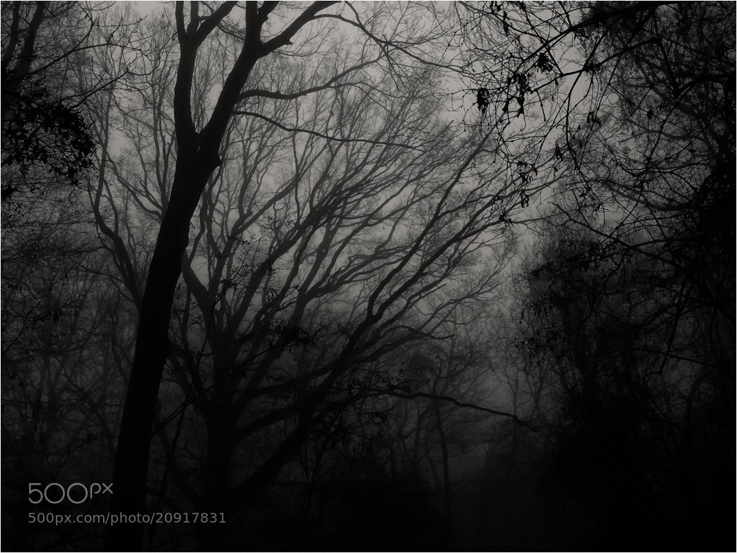 Photograph dark and foggy forest by Ulrich Fleischer on 500px