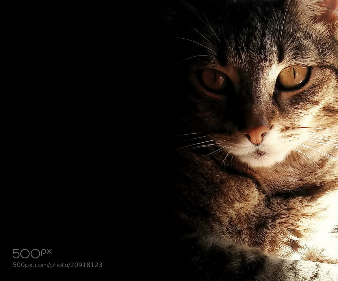 Photograph Cats Were Once Gods by Dragan Djuric on 500px