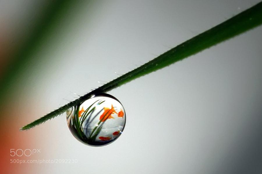 Photograph aquarium by teguh santosa on 500px