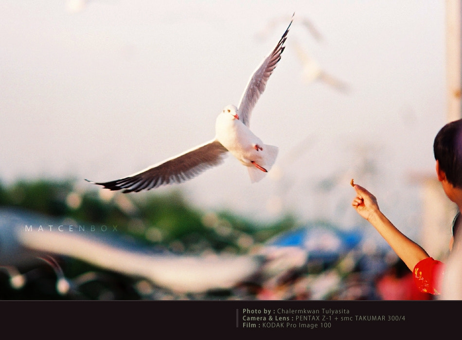 Photograph FILM : Seagull Thailand by Matcenbox  on 500px