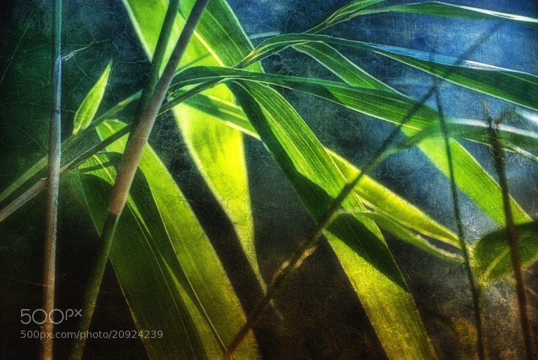 Photograph bamboo lights by Joachim G.  Pinkawa on 500px