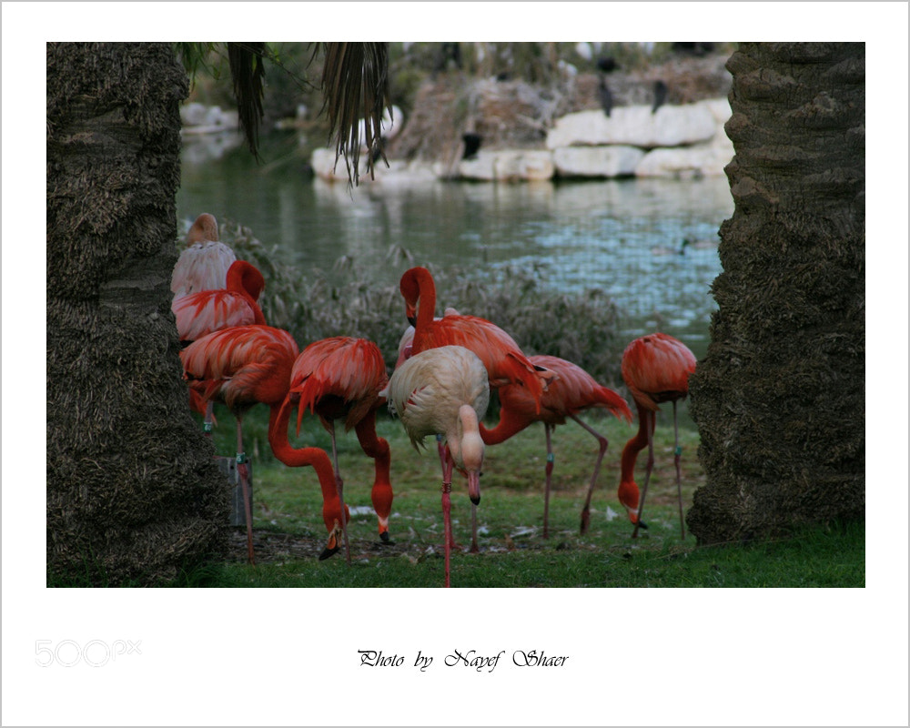Photograph Jerusalem biblical zoo by Nayef shaer on 500px