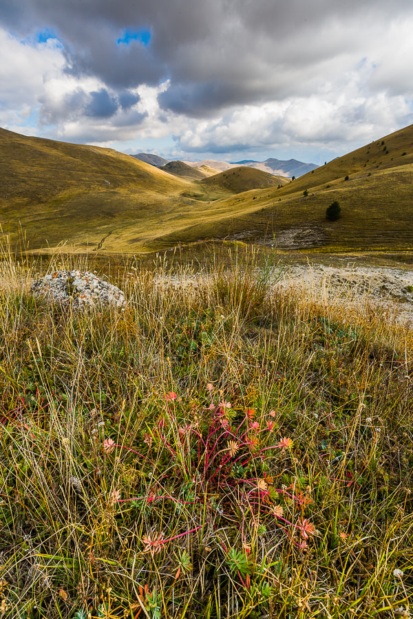 Photograph Flowers in Campo Imperatore. by Hans Kruse on 500px