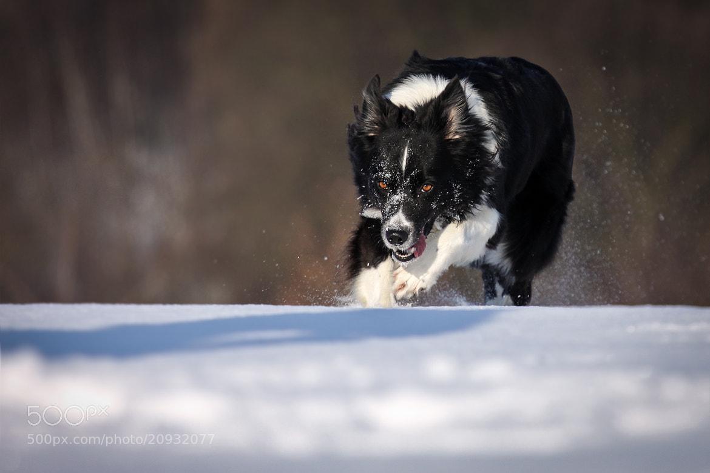 Photograph run wild - run free .... by Mathias Ahrens on 500px