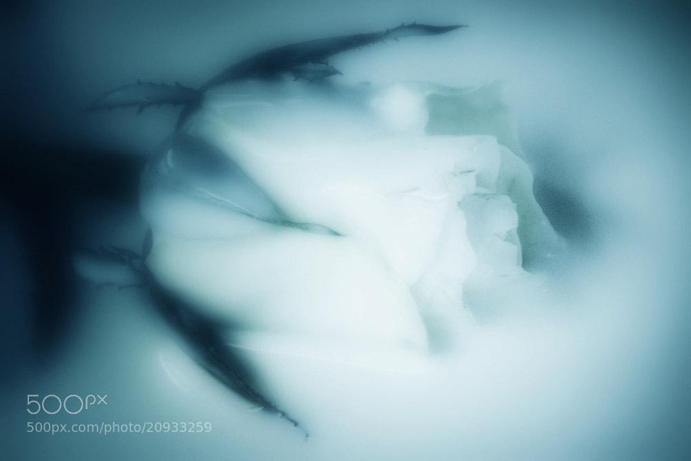 Photograph sweet dreams... by Leila Raymond on 500px