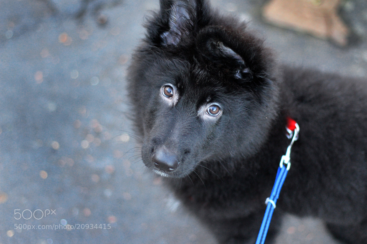 Photograph Bruno's First Walk by Gordon Foley on 500px