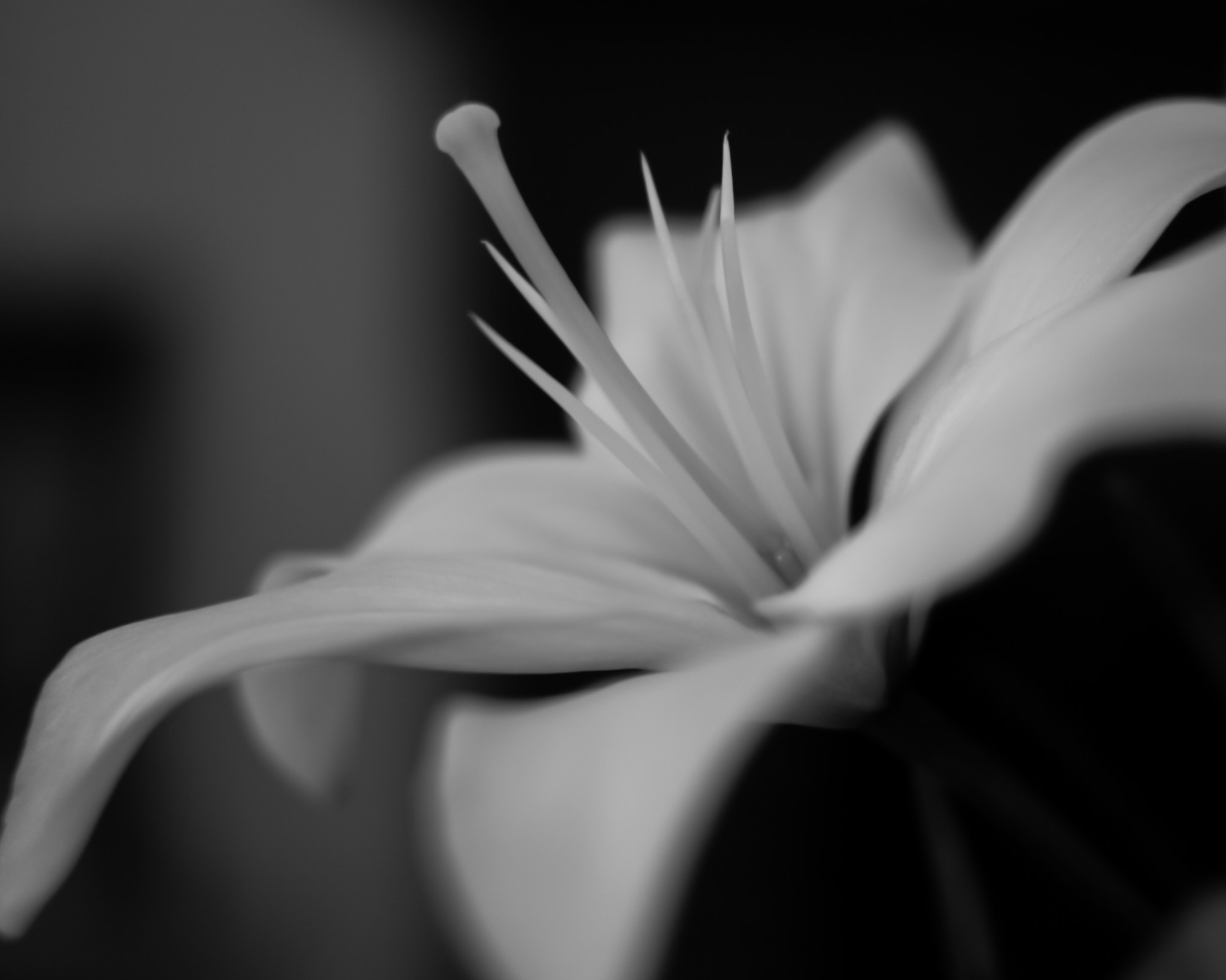 Photograph Spectral Bloom by Kenneth Williams on 500px