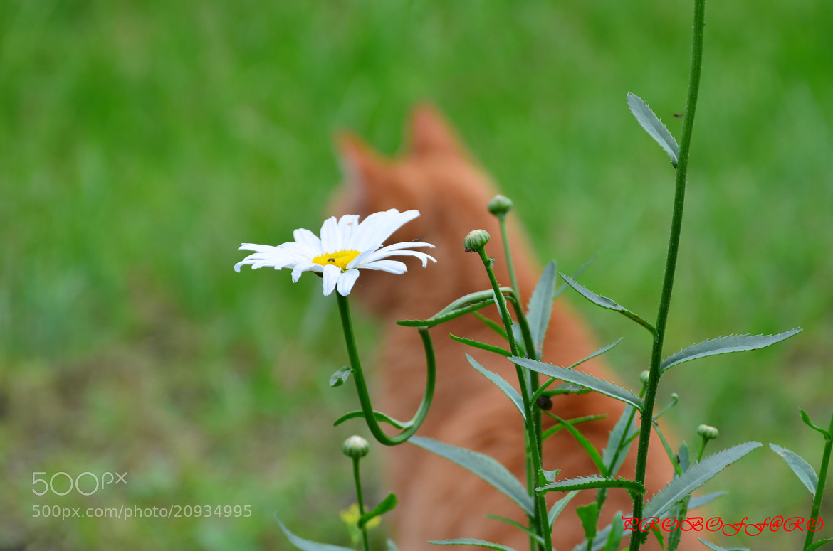 Photograph 2 flower by Rost Probof on 500px