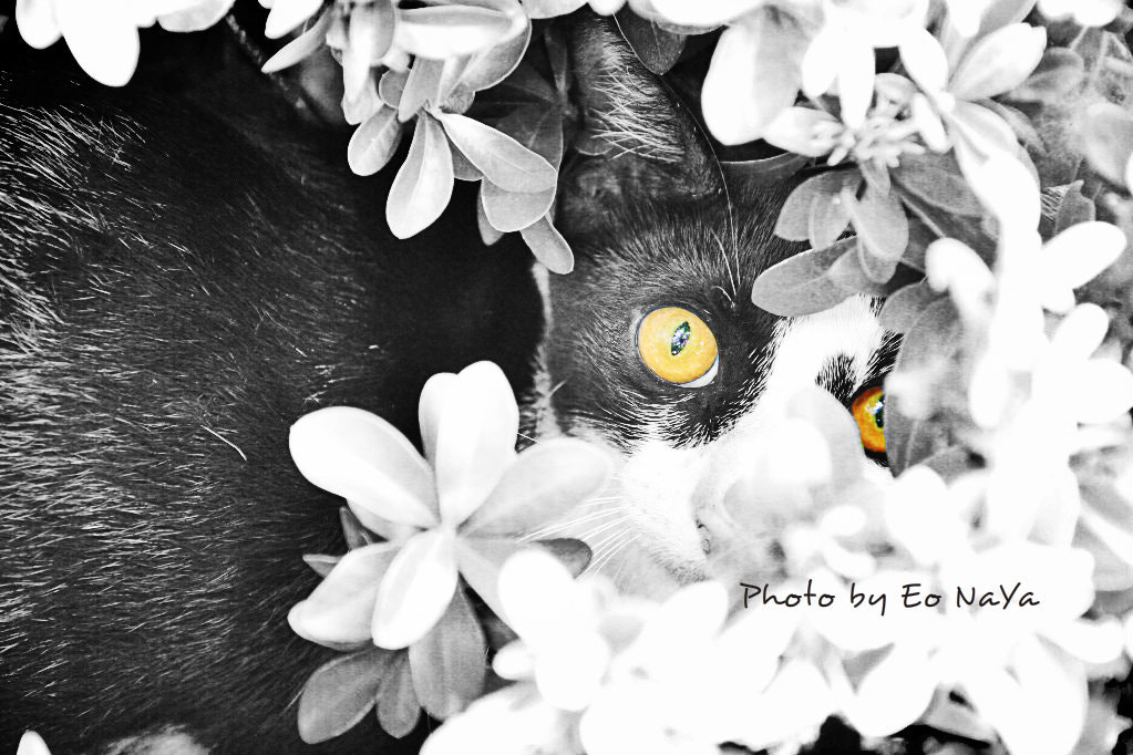 Photograph Frightened Cat ... by Eo NaYa on 500px
