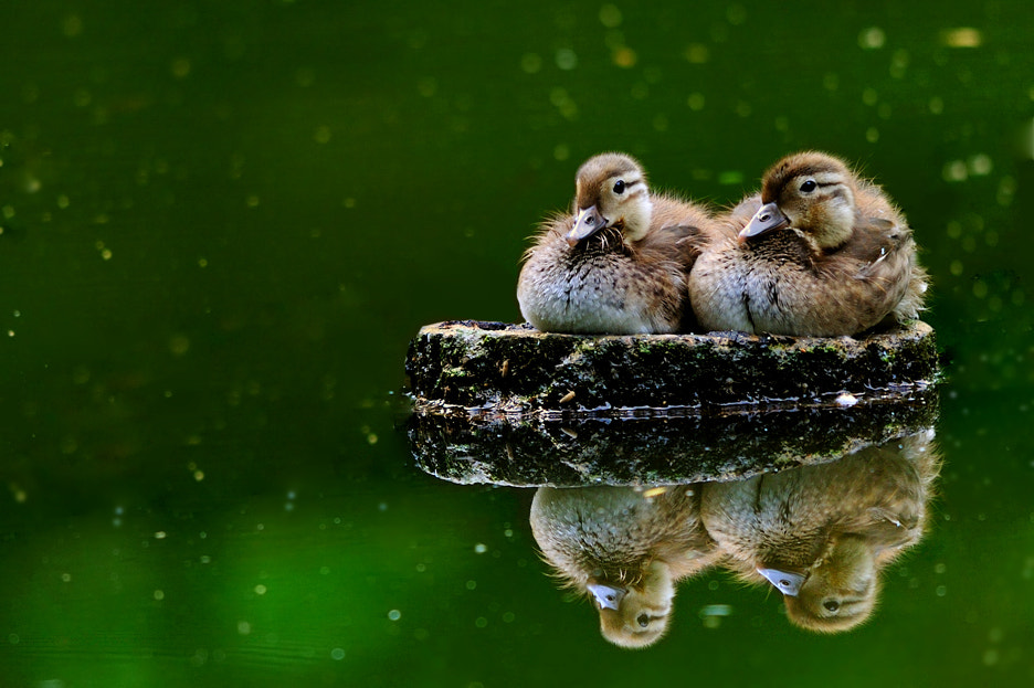 Photograph Twins by Ryu Jong soung on 500px
