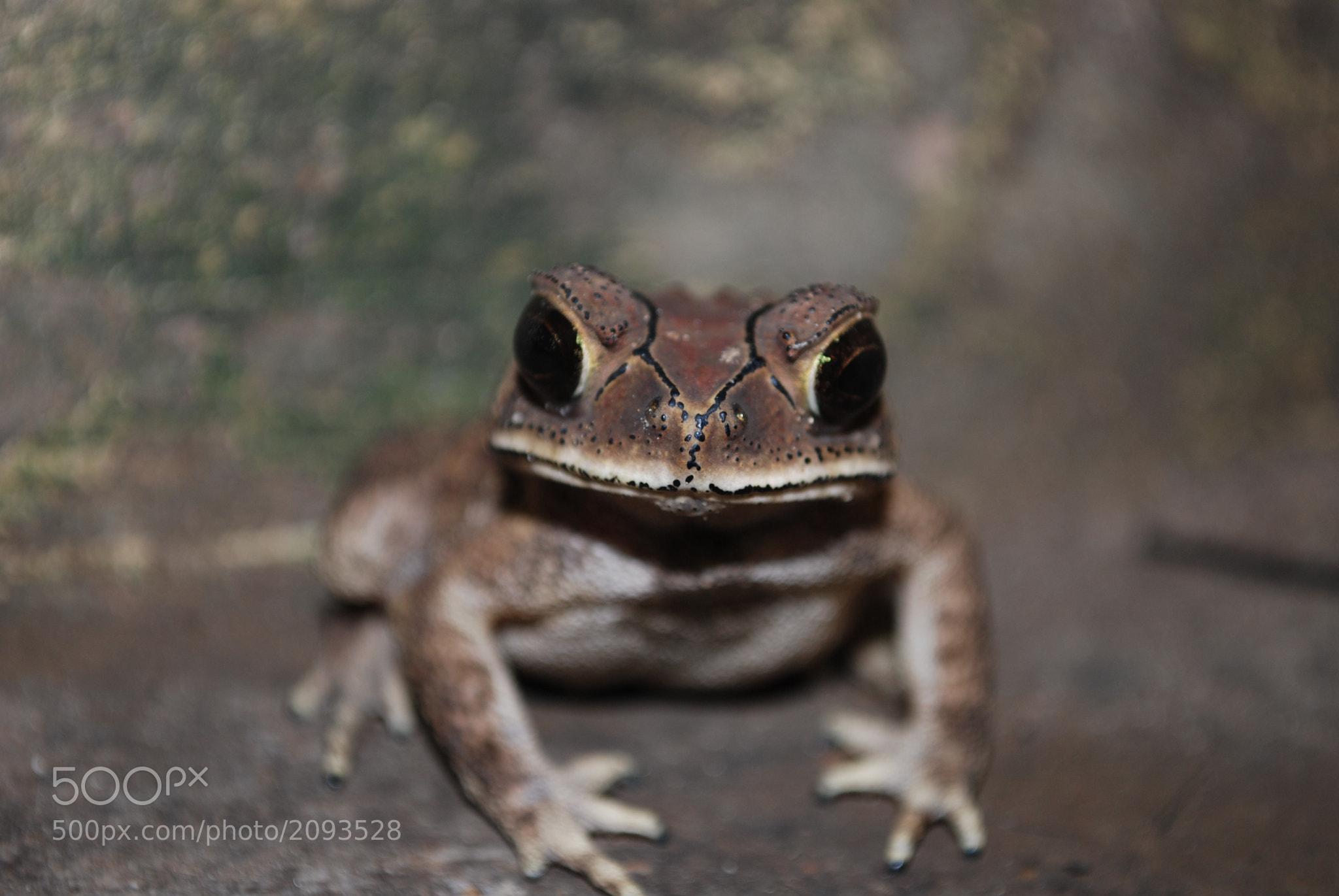 Photograph Frog by Sai Ji on 500px
