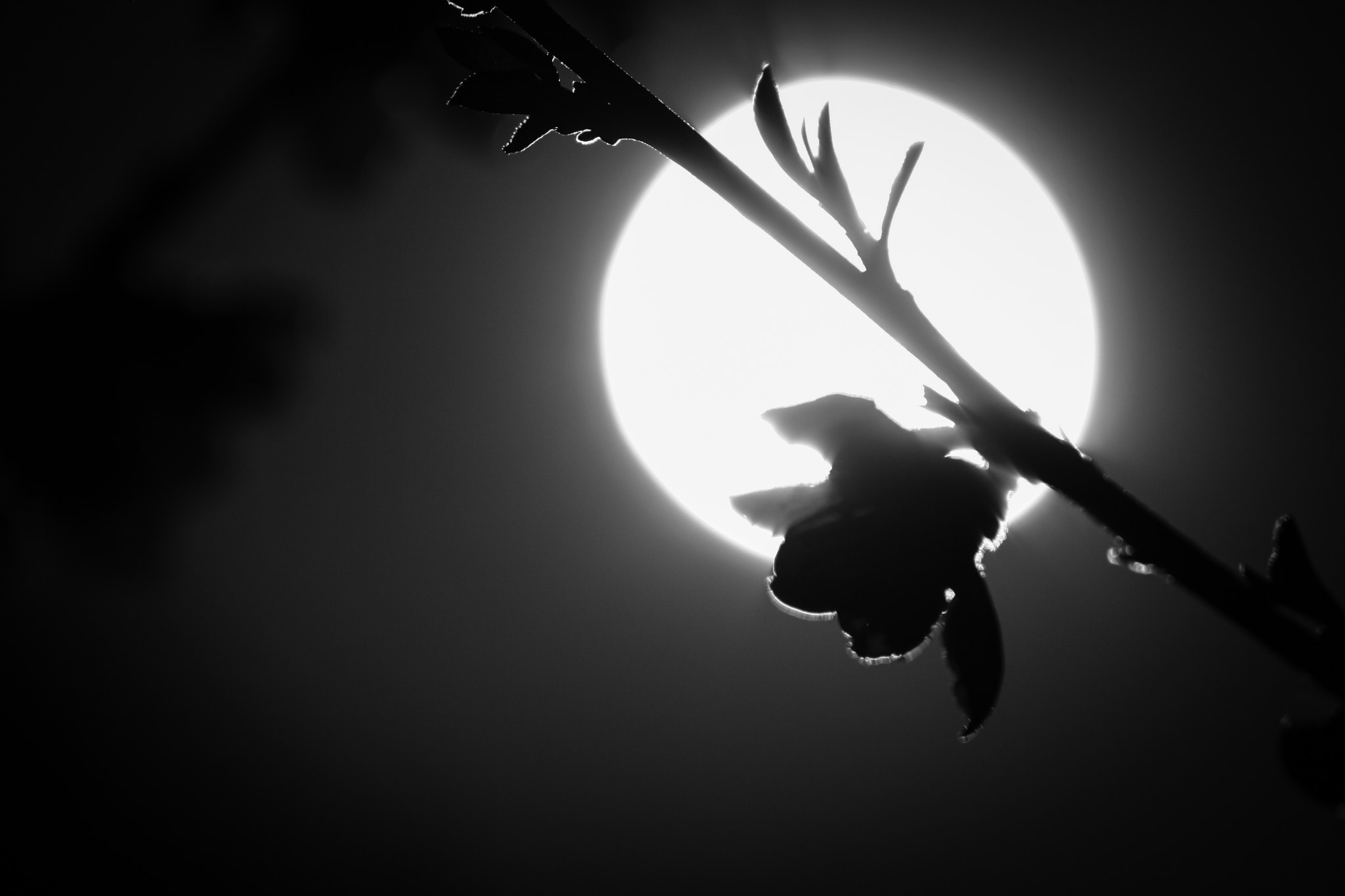 Photograph Moon Blossom by Kenneth Williams on 500px