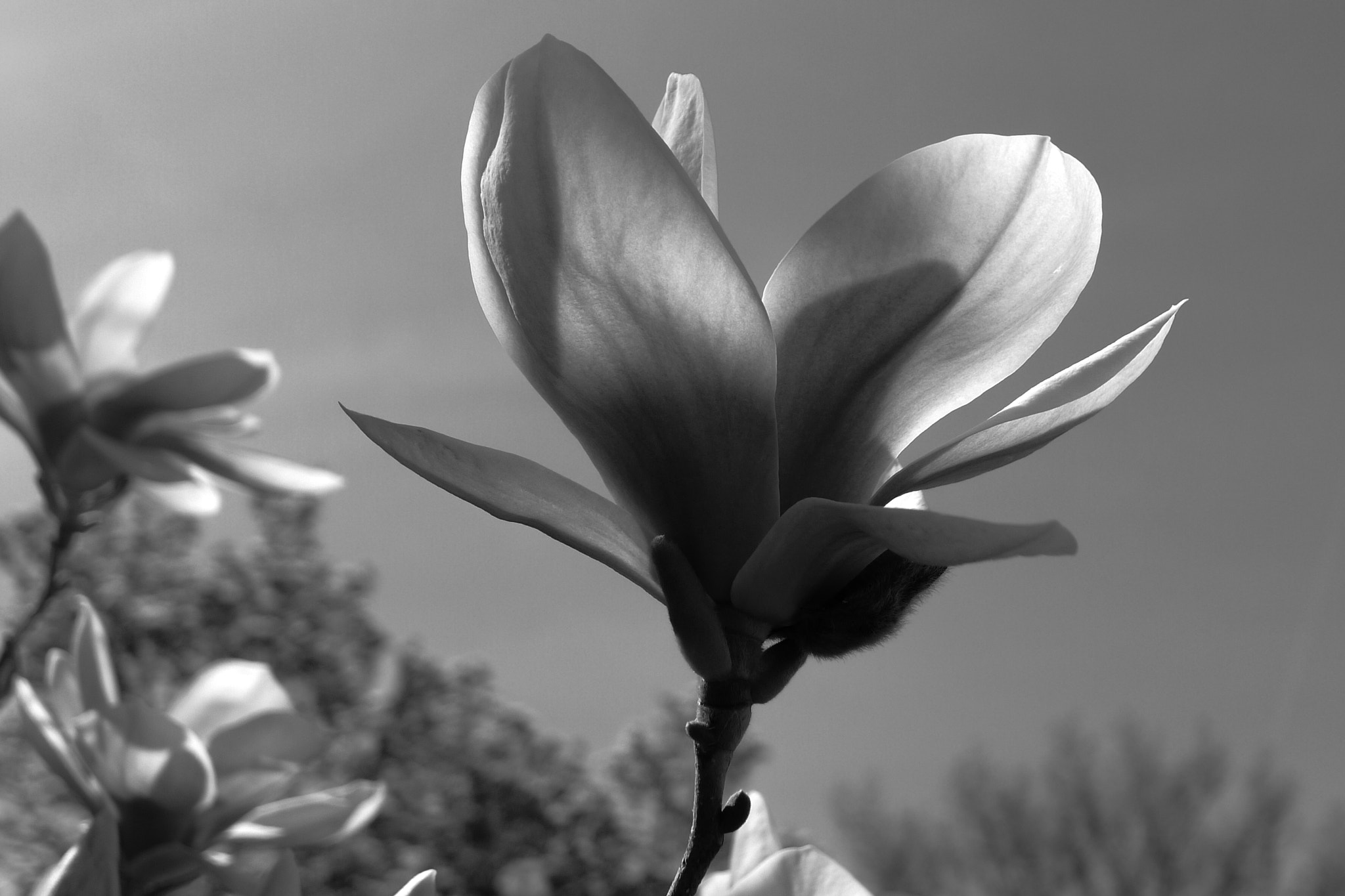 Photograph Magnolia by Kenneth Williams on 500px