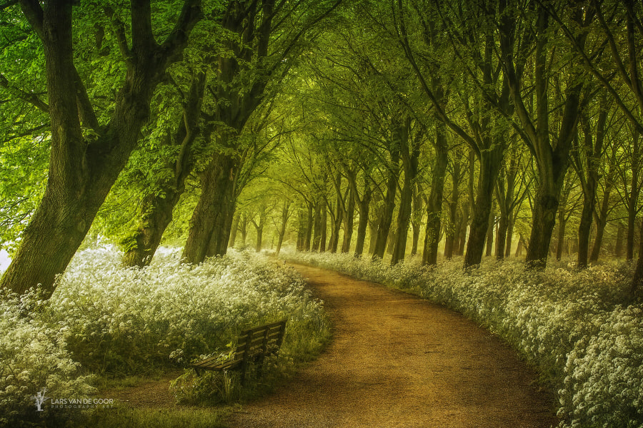 A Seat not Taken by Lars van de Goor