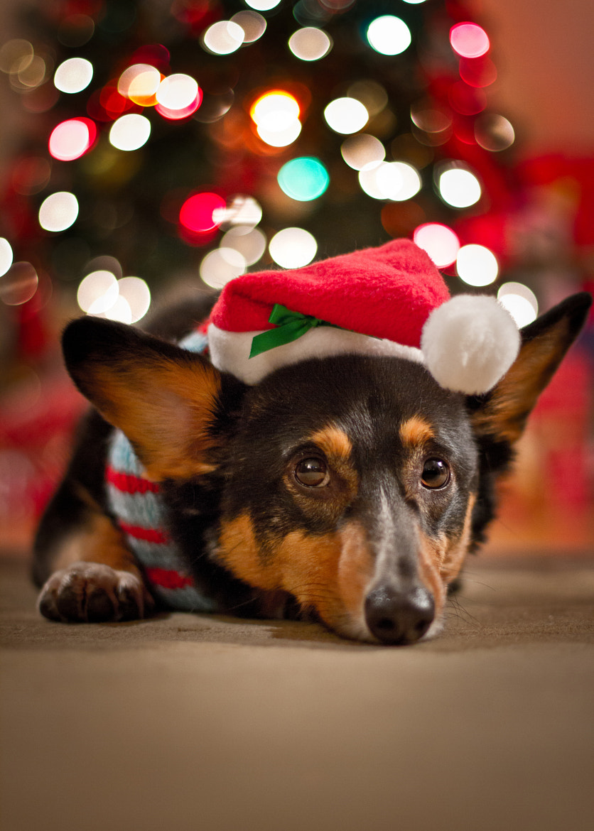 Photograph Is it Christmas yet? by Brian Buckler on 500px