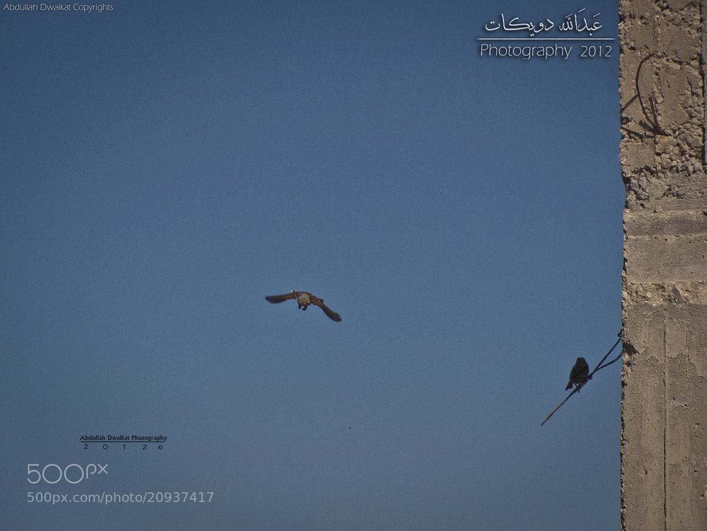 Photograph Goodbye !  by Abdullah Dwaikat on 500px
