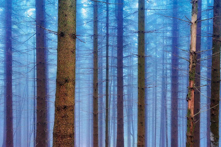"""Photograph Nebelwald by Roland """"Bill"""" Moser on 500px"""