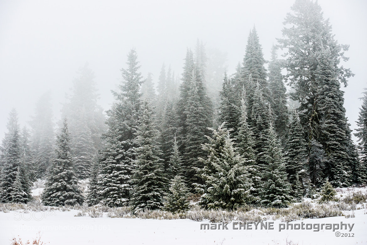 Photograph The Thicket by Mark Cheyne on 500px