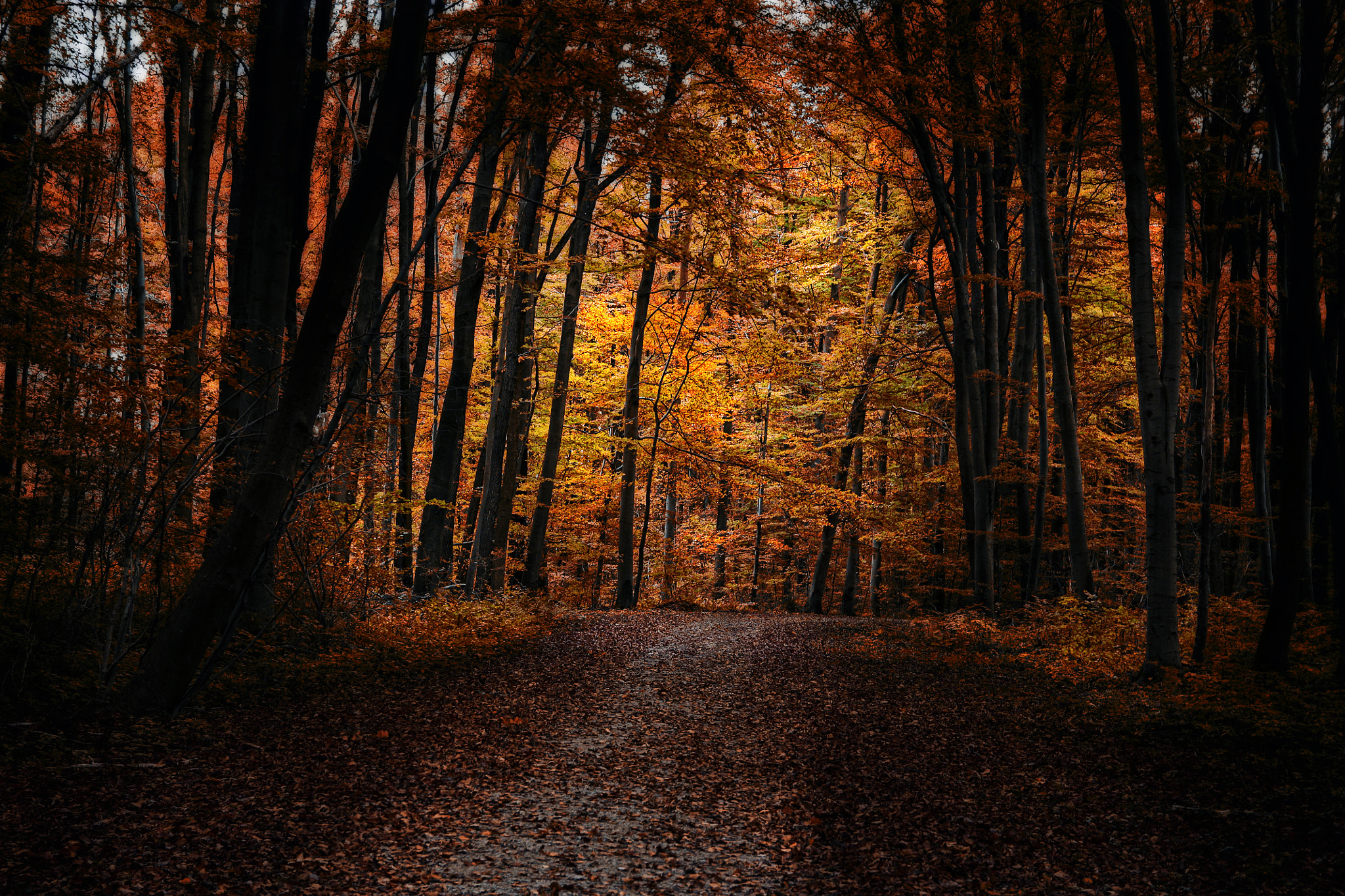 Photograph golden lights by Claudia Moeckel on 500px
