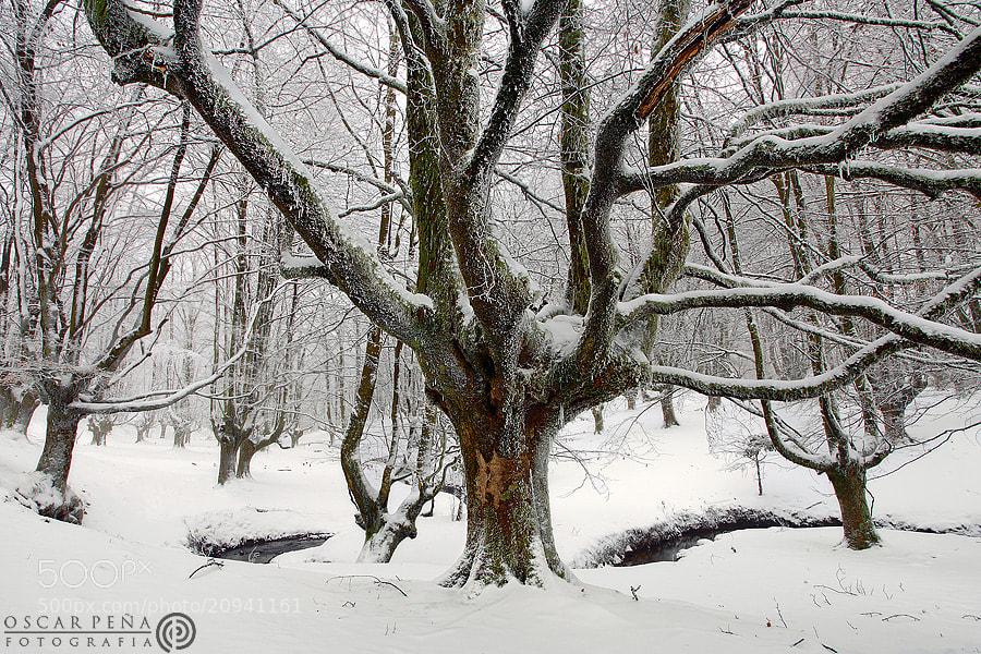 Photograph - Sweet forest - by Oscar  Peña on 500px