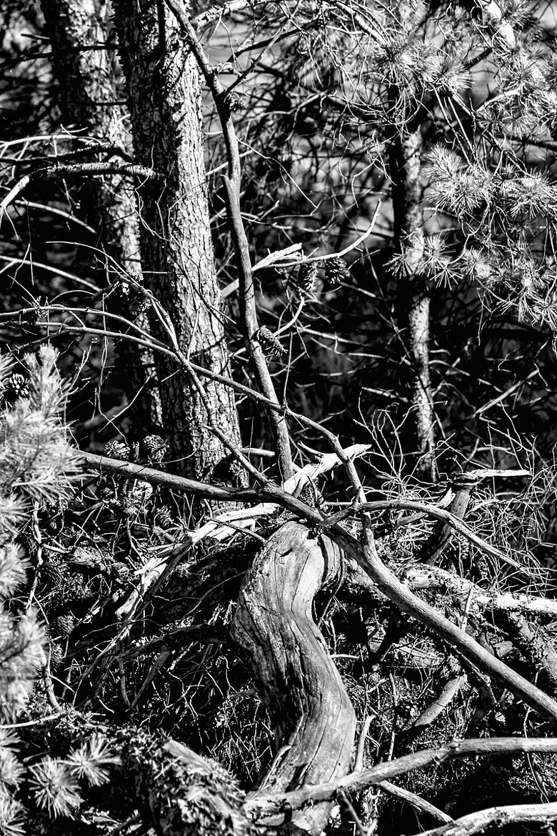 Photograph b/w wood by LH Padovan on 500px