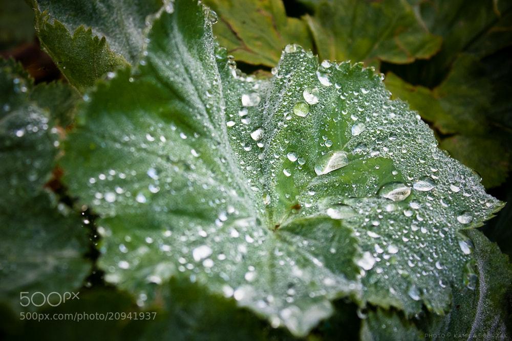 Photograph Droplets by Kamila Bobrzak on 500px