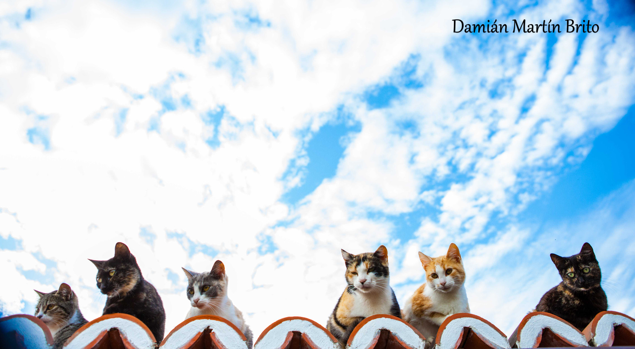 Photograph Gatos núbicos by Damian Martin Brito on 500px