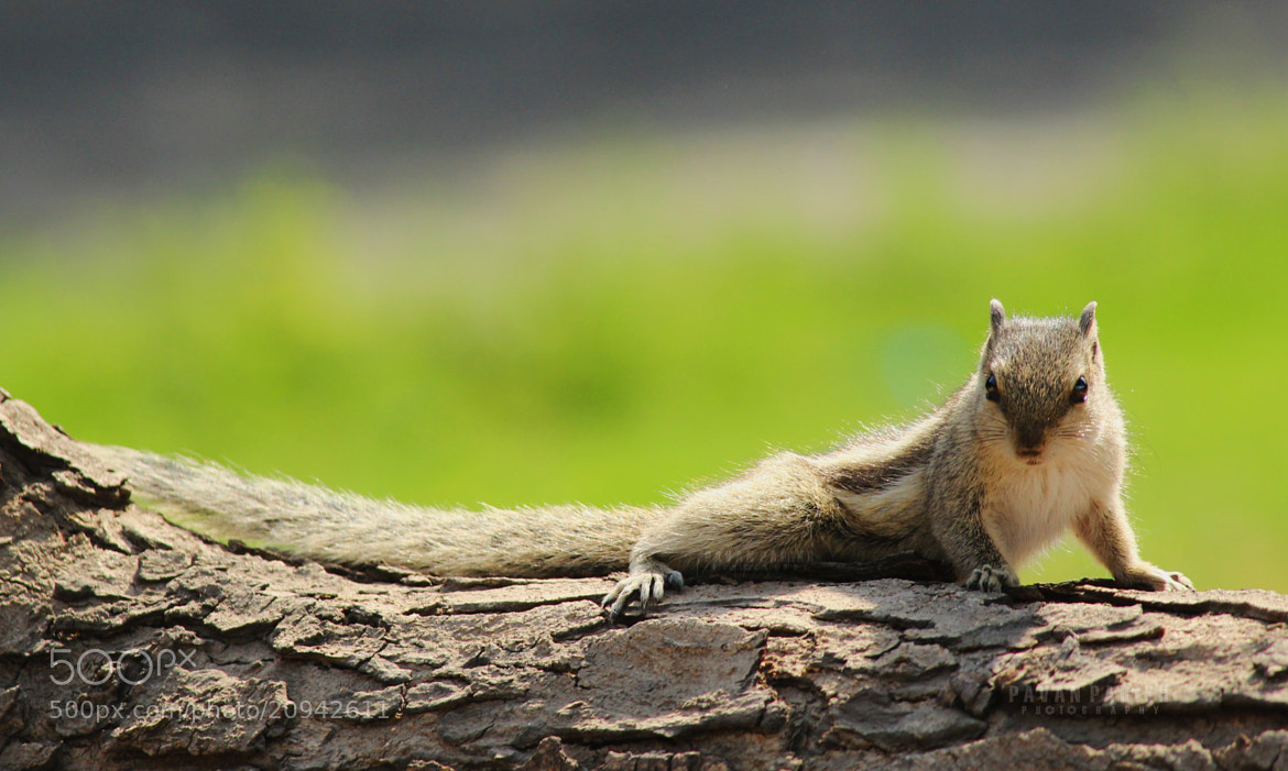 Photograph I can see you :P  by Pavan Parikh on 500px