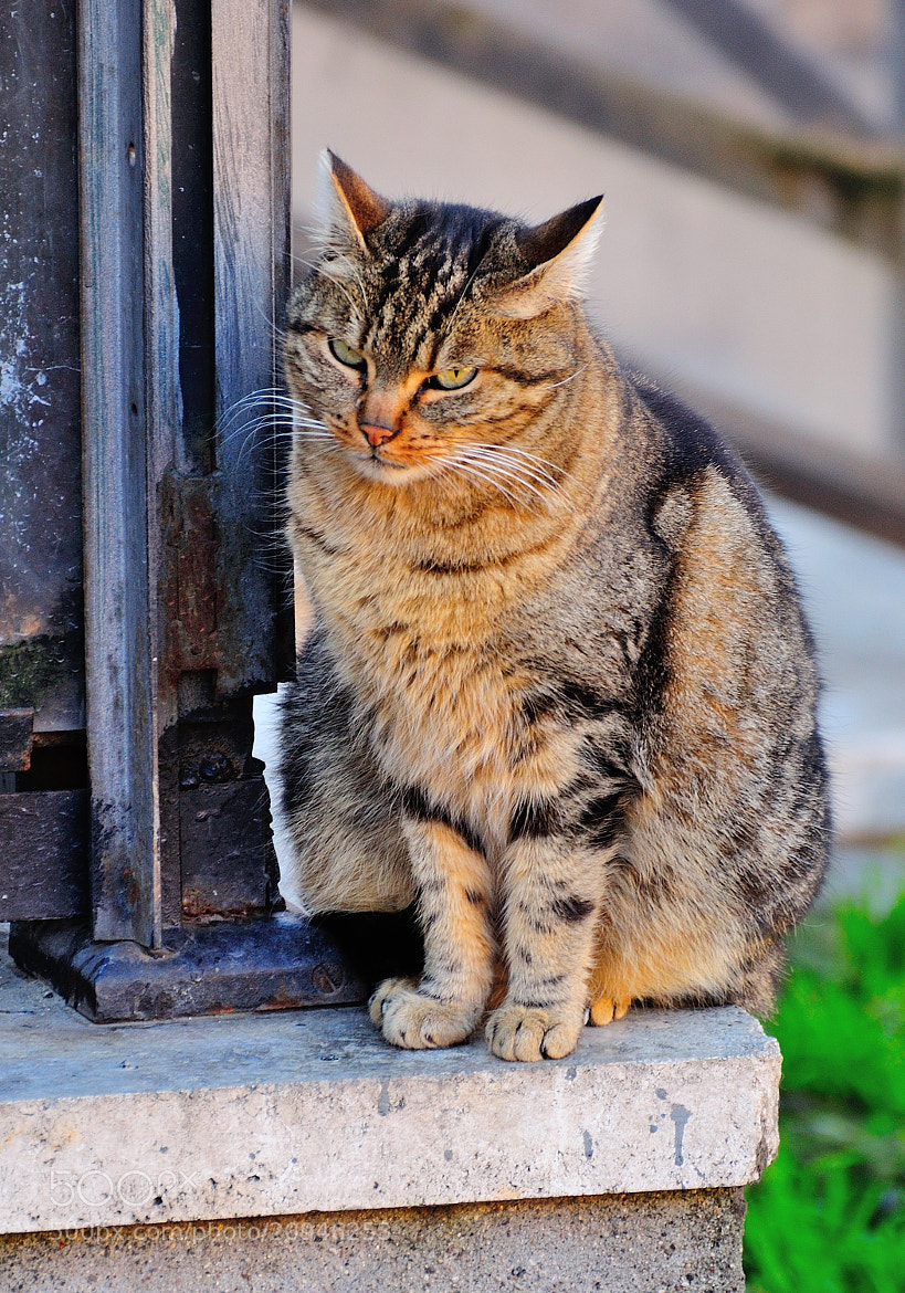Photograph Very angry cat! :-) by Renato Pantini on 500px