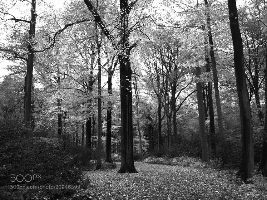 Photograph Autumn by Vaaern on 500px