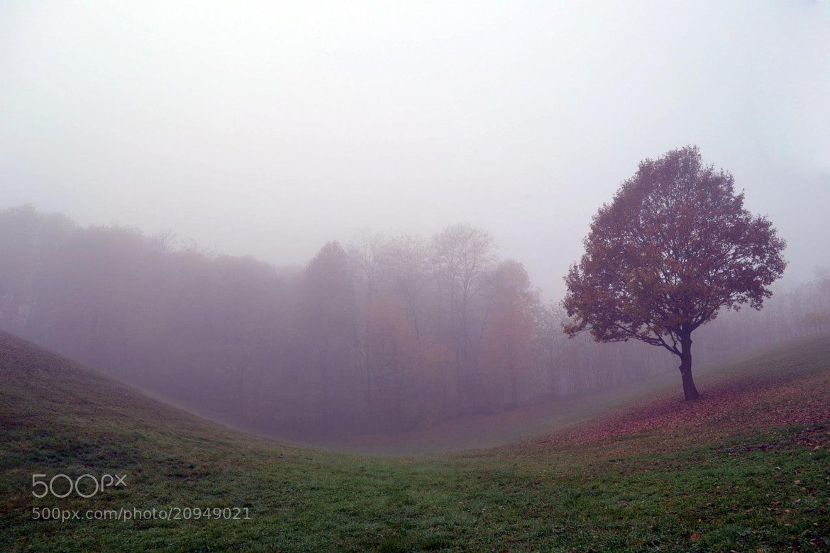 Photograph fog  by Martina Guzzo on 500px