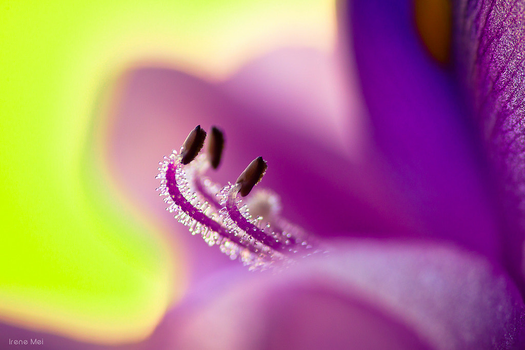 Photograph Morning Touch by Irene Mei on 500px
