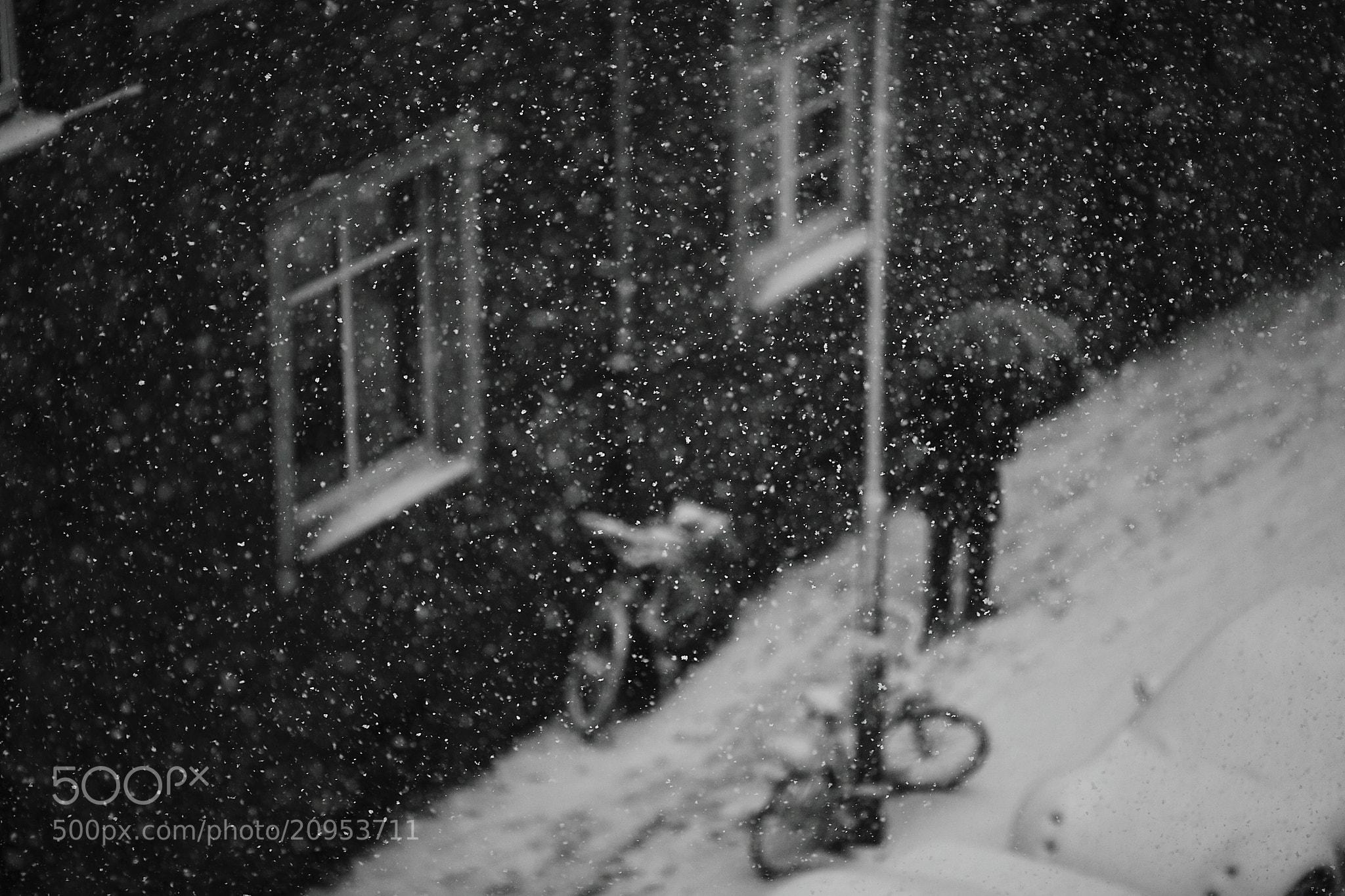 Photograph Untitled by Sandra  Drljača on 500px