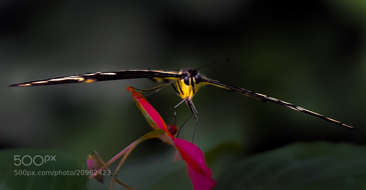 Photograph A-Flor-izaje. Mariposa by JuMiLeAl  on 500px