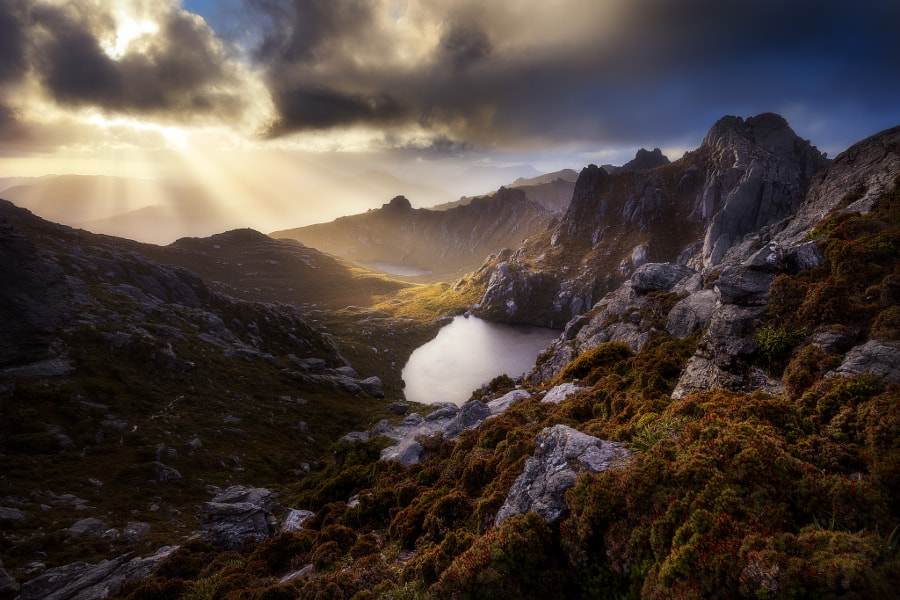 Golden Procyon by Dylan Toh & Marianne Lim