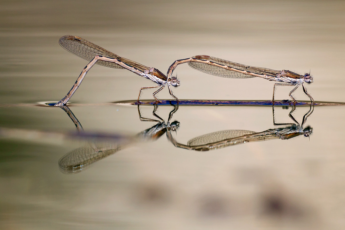 Photograph reflections by Remus Moise on 500px