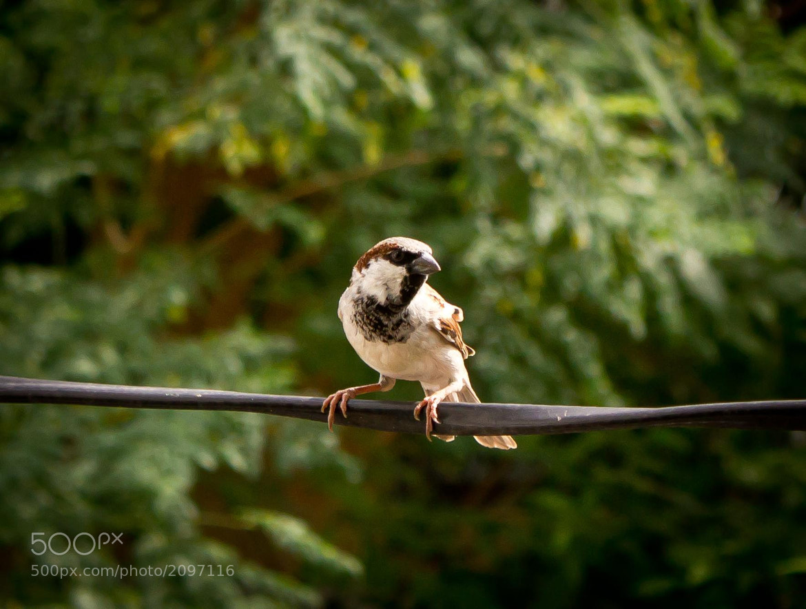 Photograph Listening Sparrow by Rajesh khavanekar on 500px