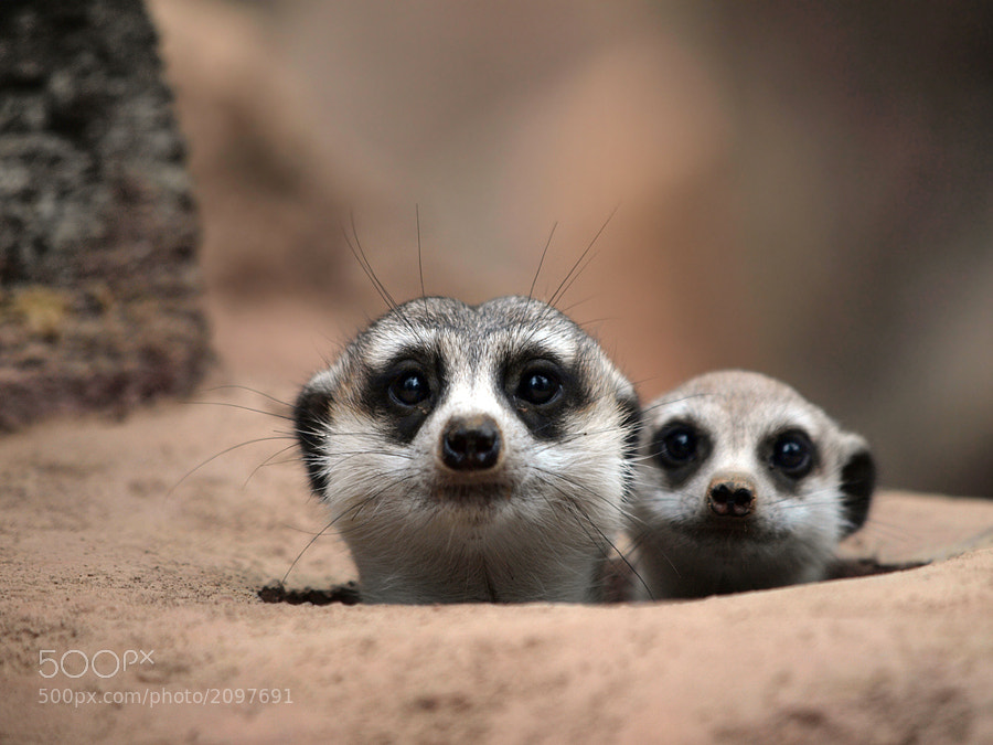 Photograph Two observers by Irawan Subingar on 500px