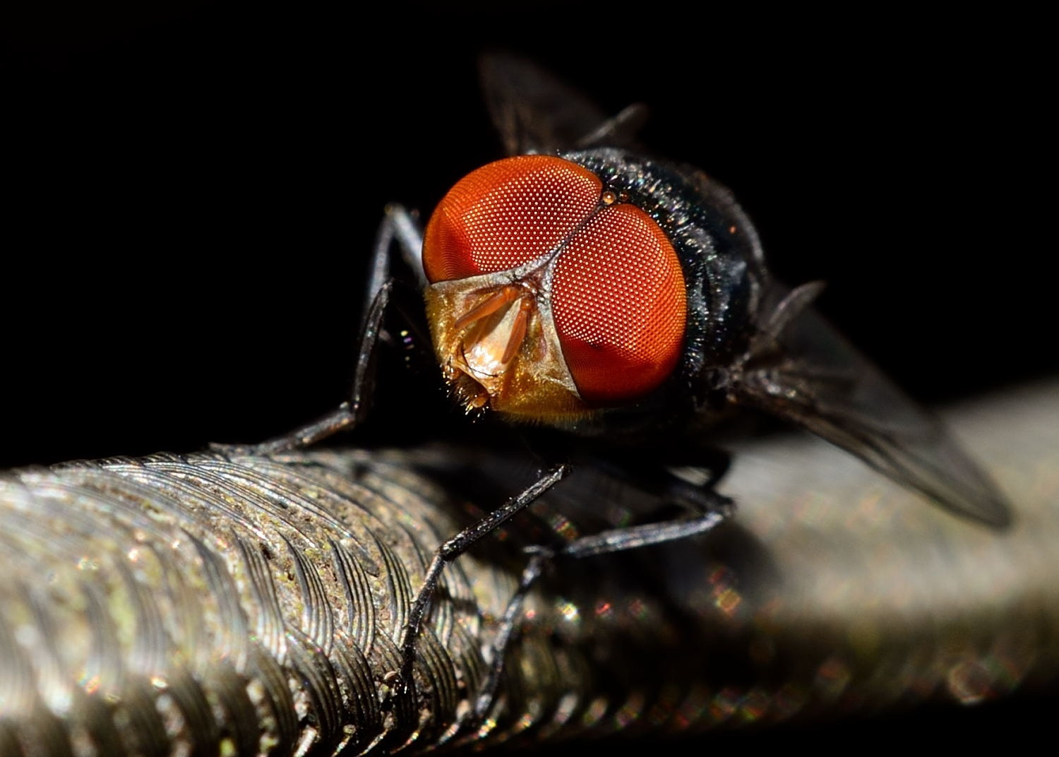 Photograph The Big Red Eyes by heat larx on 500px