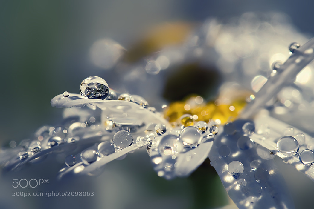 Photograph Natural Feelings by Sortvind  on 500px