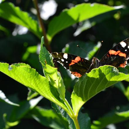 majestic butterfly