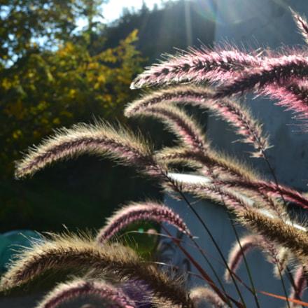 enlightned grass