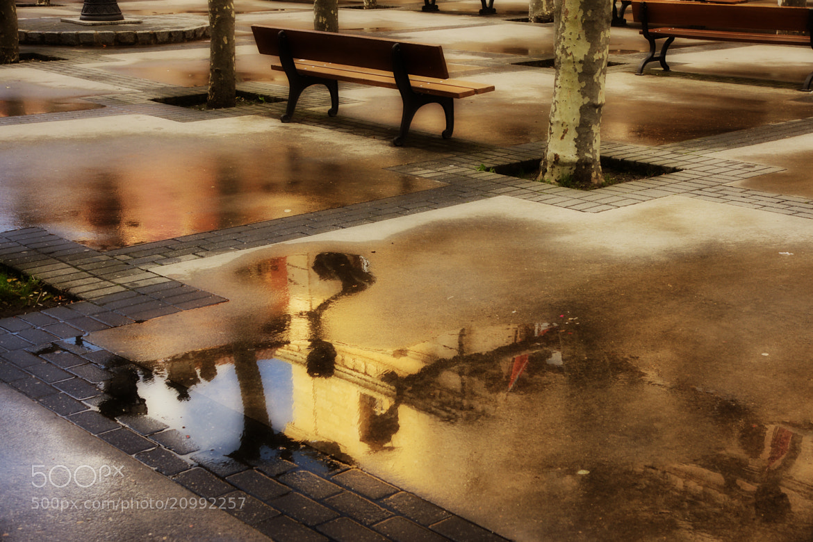 Photograph it came after the rain by kiminur lurra on 500px