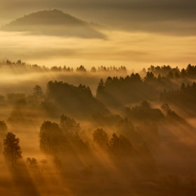 Rays In the Mist by Martin Rak (martas)) on 500px.com